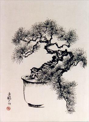 Bonsai Pine by Frederica Marshall