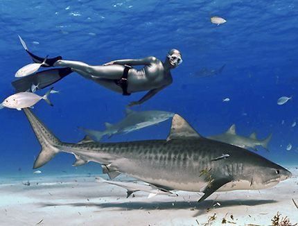 Lifespan of a Shark - http://www.withinthesea.com/reef-fish/sharks/lifespan-of-a-shark/