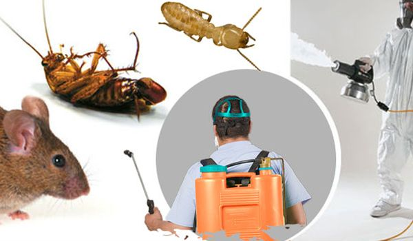 Get Rid Of All Unwanted Pests With India S Leading Pest Control Company Hicare Pest Control Services Hicar Termite Control Pest Control Services Pest Control