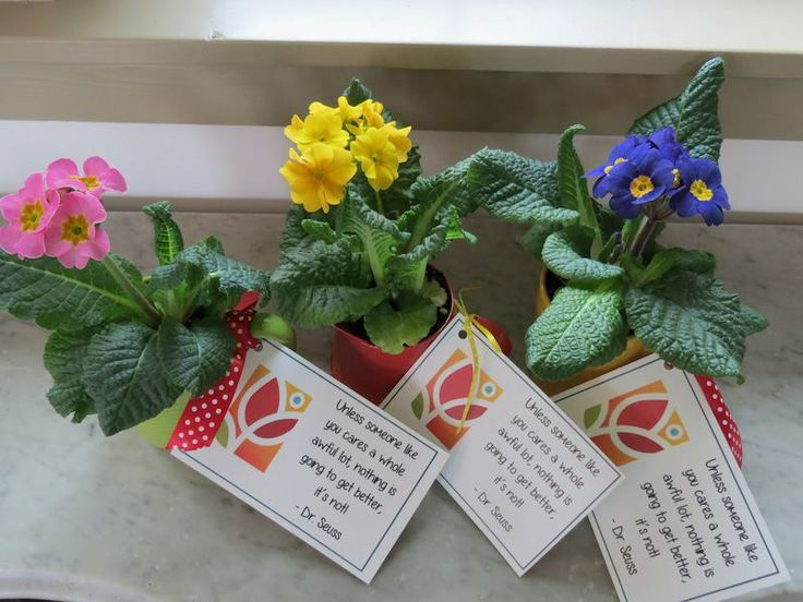 7 best volunteer appreciation ideas images on pinterest diy idea for volunteer appreciation event party favors negle Choice Image