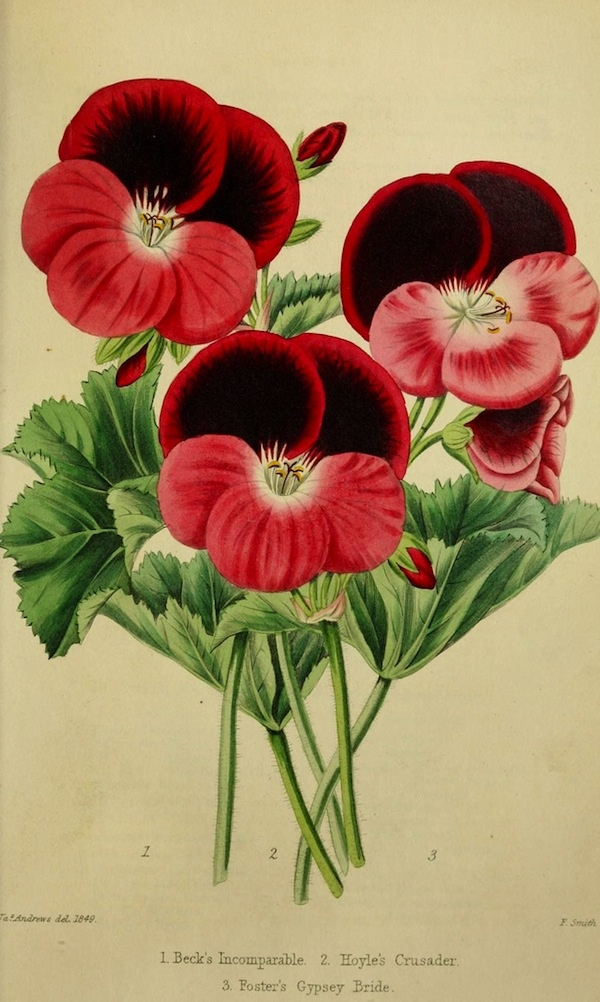 vintage flower print, would love to have this....and hunt for more of these prints