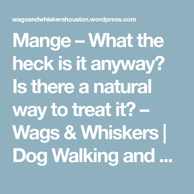 Mange – What the heck is it anyway? Is there a natural way to treat it? – Wags & Whiskers | Dog Walking and Pet Sitting