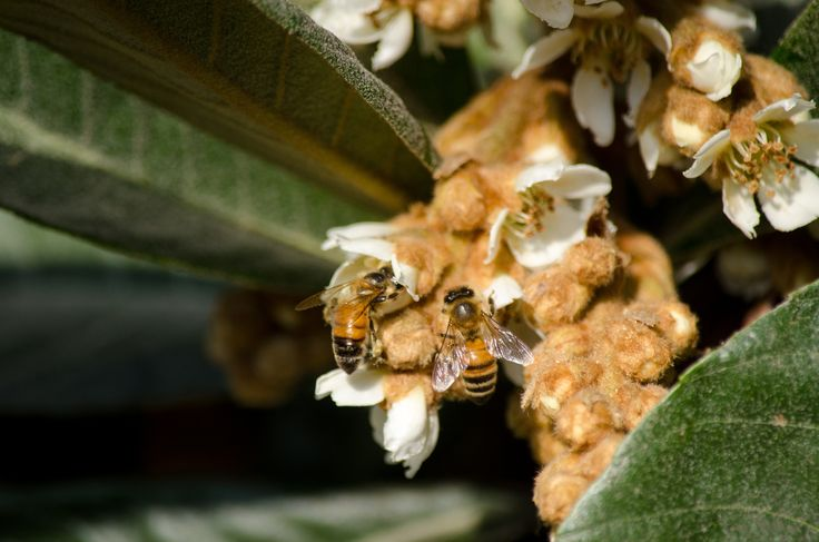 bee beauty working - bee beauty working