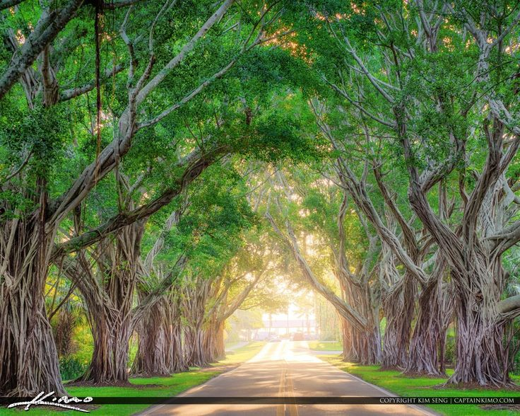 Hobe Sound/Tree Tunnel/ Beach Road