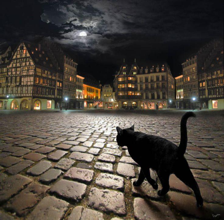 Black cat in a night city