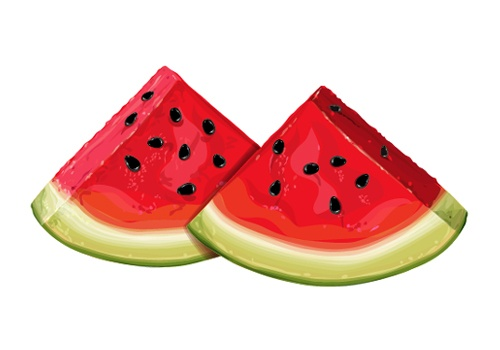 Vector illustrated water melon.