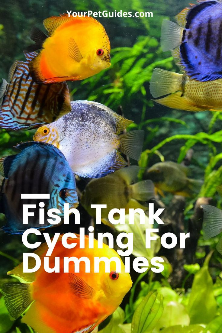 Aquarium Cycling Guide For Dummies In 2020 Fish Tank Pet Fish Animal Lover