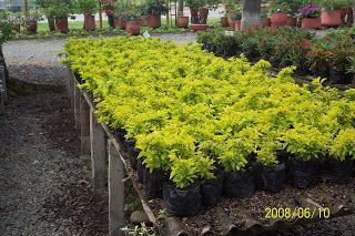 Plantas plantas ornamentales de sol medio ambiente agua for Diseno de plantas ornamentales