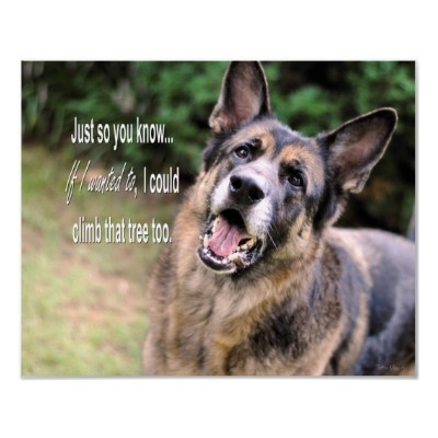 Funny German Shepherd Dog Poster Print by twokissesphotography