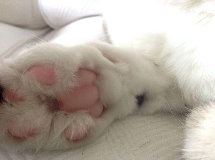 Taken by me cutie cat