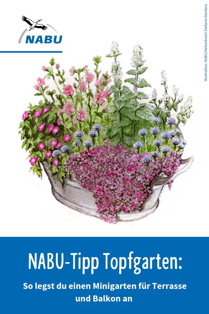 18+ NABU Tipp Einen Topfgarten anlegen   Garten anpflanzen, Garten ... Image
