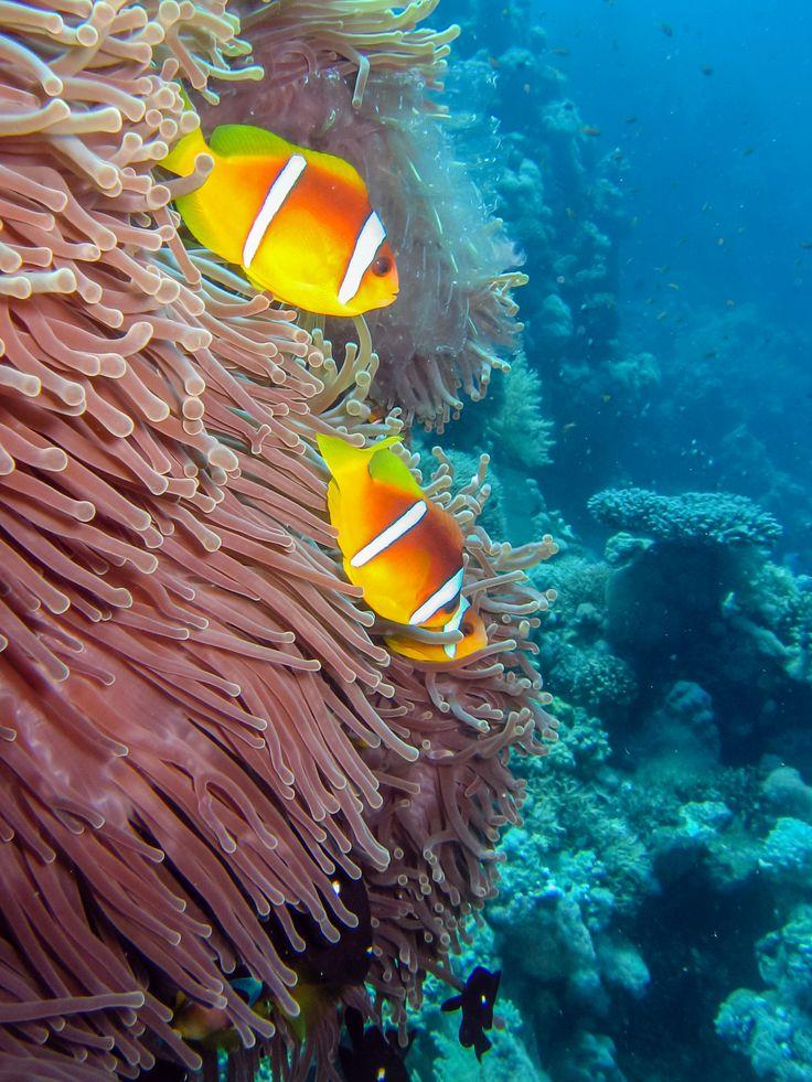 Couple de poissons-clowns : Le meilleur du concours de photos sous-marines - Linternaute