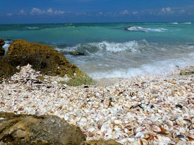 Shelling In 2018 Pinterest Sanibel Island Florida And Beach