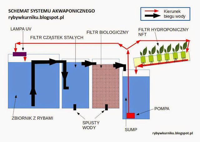 Budowa systemu akwaponicznego