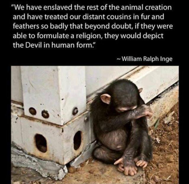 animals have feelings just like humans essay