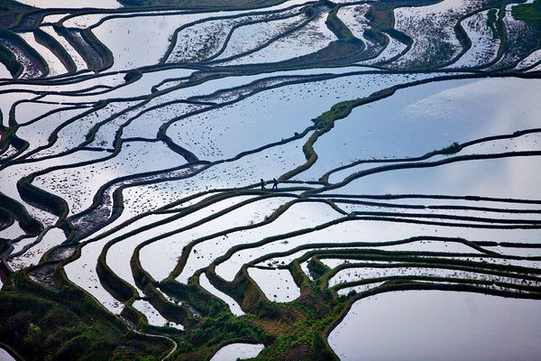 Images of Yunnan Province in China. Rice terraces in southern Yunnan Province, #China. #Agriculture #Yunnan #Farming #Rice #Travel