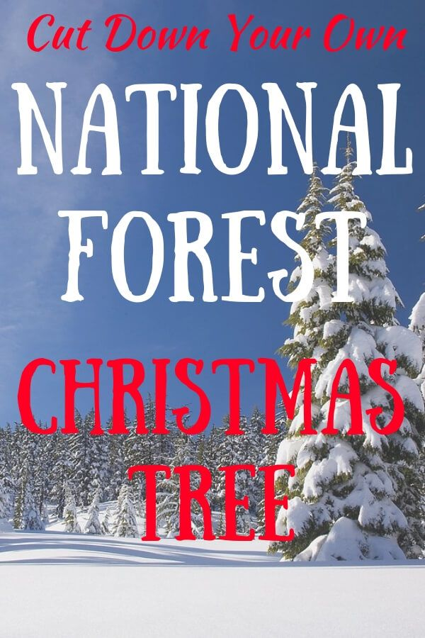 Fall In Love With Your National Forest Christmas Tree Christmas