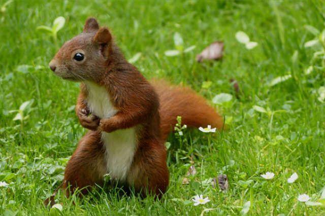 Répulsif naturel pour vite éloigner les écureuils de votre terrain et de votre maison!