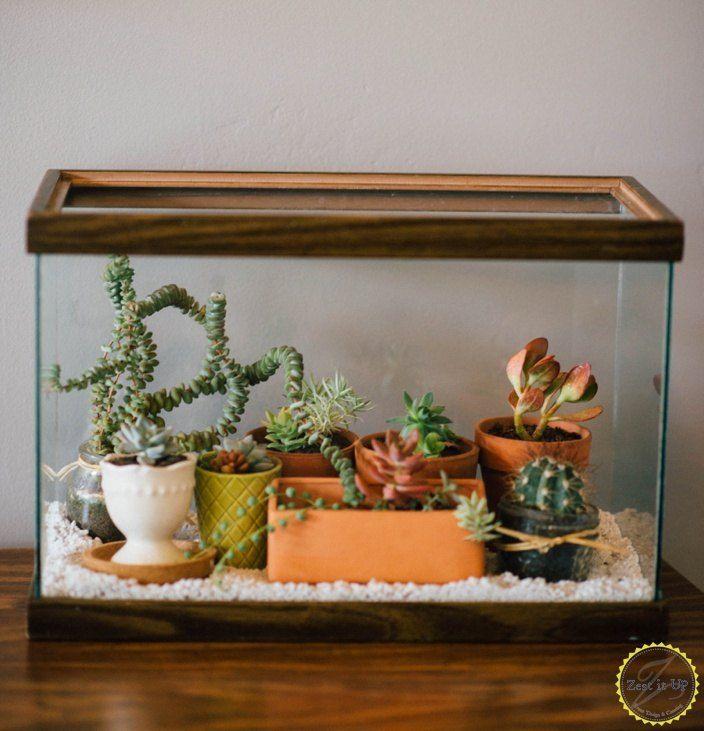 easy diy terrarium from an old fish tank, gardening, terrarium