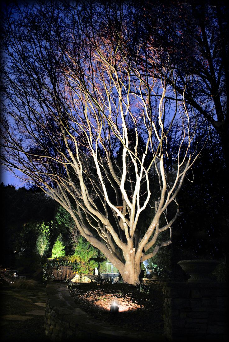 japanese outdoor lighting. Beautiful Landscape Lighting Accent Shot Of This Mature Bloodgood Japanese Maple By Outdoor Advantage