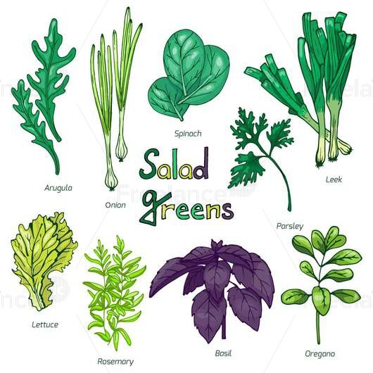 A set of herbs for salad. Vector illustration Buy, sell ready-made graphics.