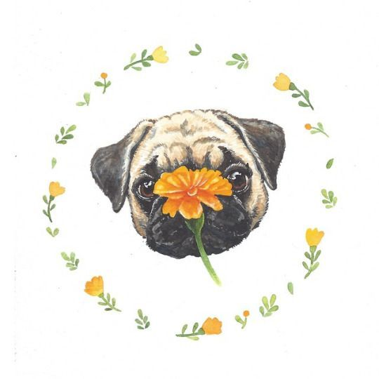 need a pug tattoo one day