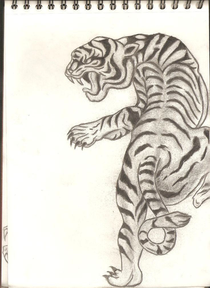 how to draw traditional tigert
