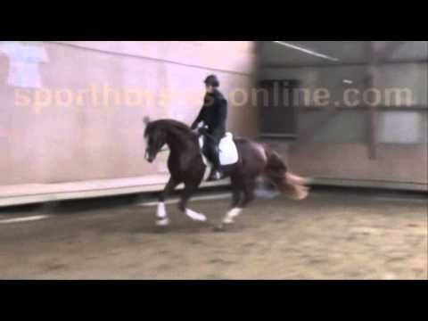 www.sporthorses-online.com 2012 Hanoverian Dressage prospect 16.3 hh for...