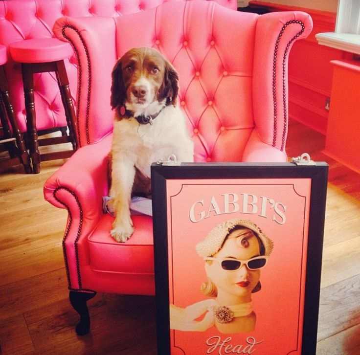 National Puppy Day at the #gabbishead. The beyond gorgeous Jerry Springer took centre stage