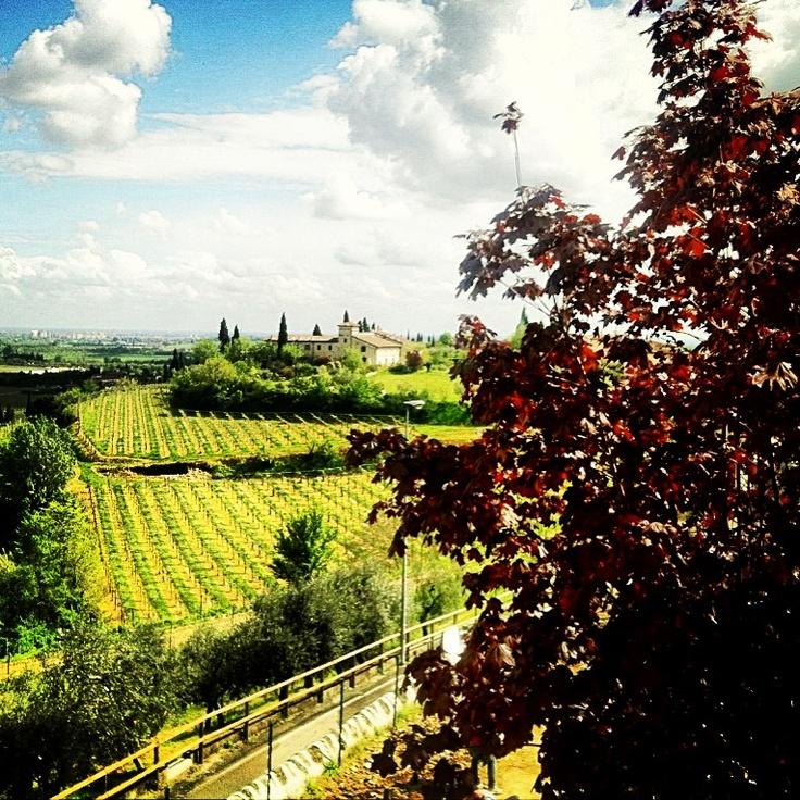 Valpolicella, Italia. Il panorama del vino. Valpolicella, Italy. The landscape of wine.