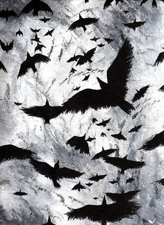 crows, ravens, flying, black and white