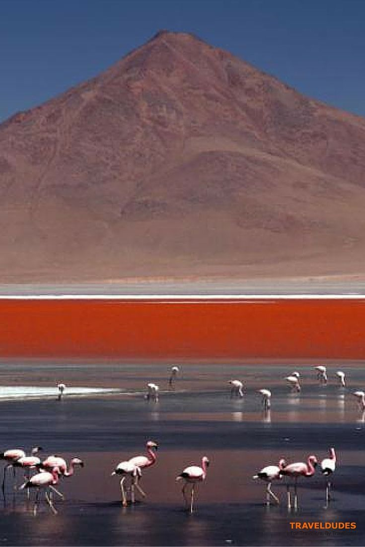 Due to the minerals the laguna colorada in Bolivia is shining in amazing red and white colors | Traveldudes Social Travel Blog & Community: