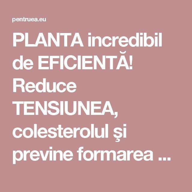 PLANTA incredibil de EFICIENTĂ! Reduce TENSIUNEA, colesterolul şi previne formarea CHEAGURILOR de sânge