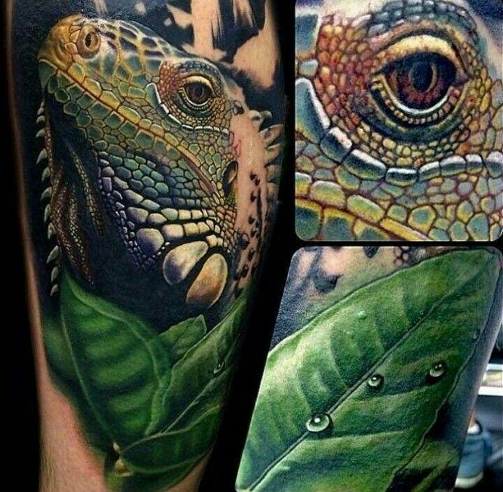 10 Best Iguana Images On Pinterest