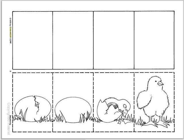 nace un pollito