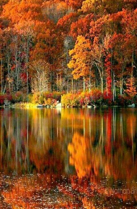 The rich colors of Autumn. – sevgi yelkenbiçer