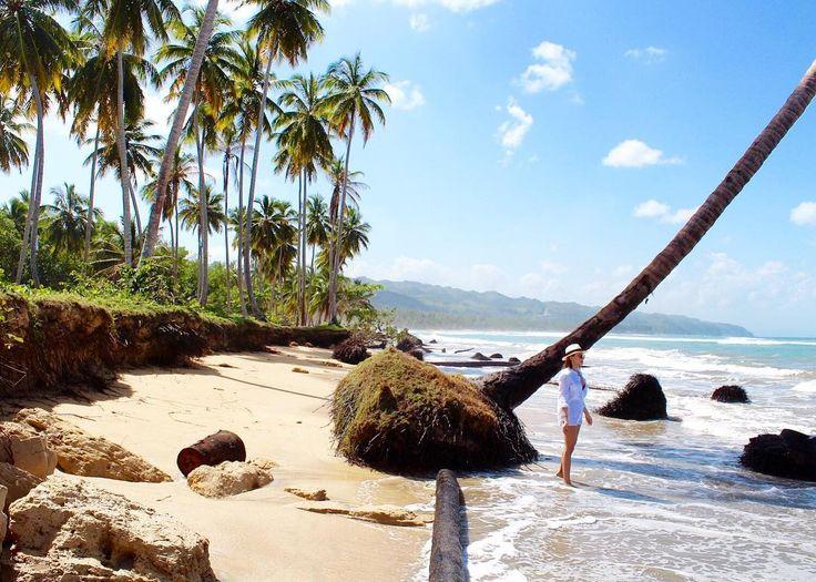 Beauty of nature #dominica#wild#beach#samana#palms#sand#sea#nature#travel#instatraveling#instanature#beautiful#view#intagood