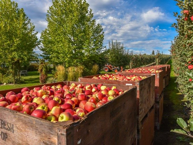 Sold Home - 5981 Kruger RD, Vernon, BC V1B 3V4 - CENTURY 21 15 acres of gorgeous land with 2 houses on it with a hot tub and a pool.  High quality Ambrosia apple farming creates $70,000 per year income. The sellers have shut down 7.5 acres of apple production that could be revived. Income in 2008 was $140,000 with all acres farmed. Computerized irrigation system. Equipment negotiable.