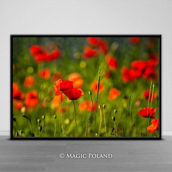 Poppies Printable Wall Art Instant Download Printable
