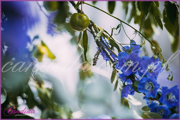 drzewko jabłoni udekorowane kwiatami, dekoracje kwiatowe  ślubu w plenerze w Dworze Radzin 22