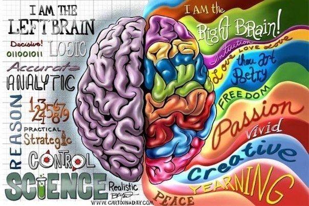 Почему и как нужно совершенствовать полушария мозга?  Вот все привыкли к тому, что нужно развивать память, внимание, интеллект, тело своё совершенствовать. Но почему-то при этом мало кто обращает внимание на сам мозг, от которого развитие всего этого в большинстве случаев и зависит. Даже тело развиваться и совершенствоваться не будет, если перед этим мозг хорошенько не настроится и не обдумает, как подступиться к работе над телом.  Всем хорошо известно, что мозг состоит из двух частей…