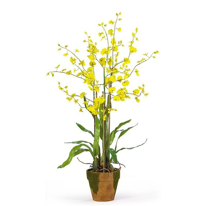 this dancing lady yellow silk orchid arrangement in moss pot looks like it just came in - Silk Orchids