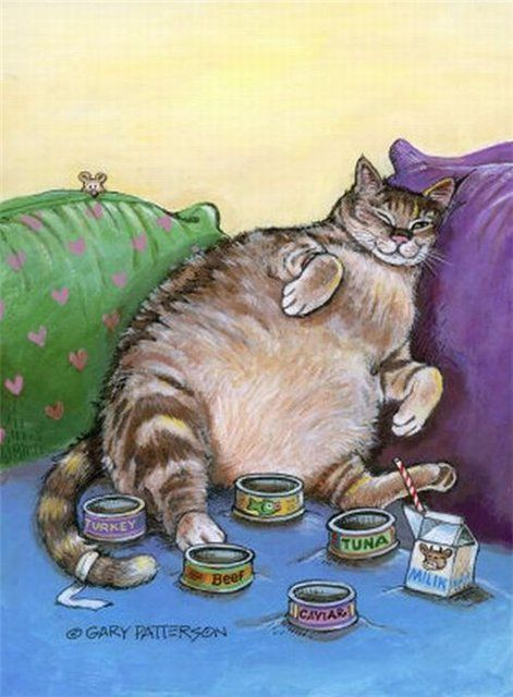 Gary Patterson  My little kittie - Maximus :)