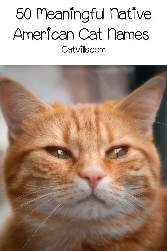 50 Meaningful Native American Cat Names