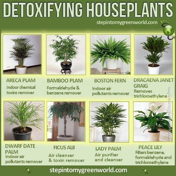 10 best house plants images on Pinterest Indoor plants - deshumidificateur d air maison