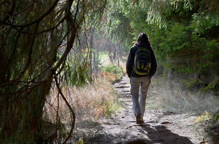 https://flic.kr/p/AjFkDu | Emerging from the dark into the light on the Shepherd's trail, Feldberg, Black Forest, Germany