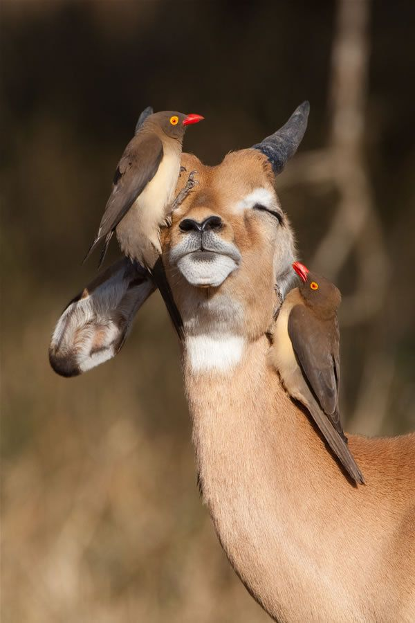 So this is what it's like to be a pirate? Kruger National Park - Best Buds