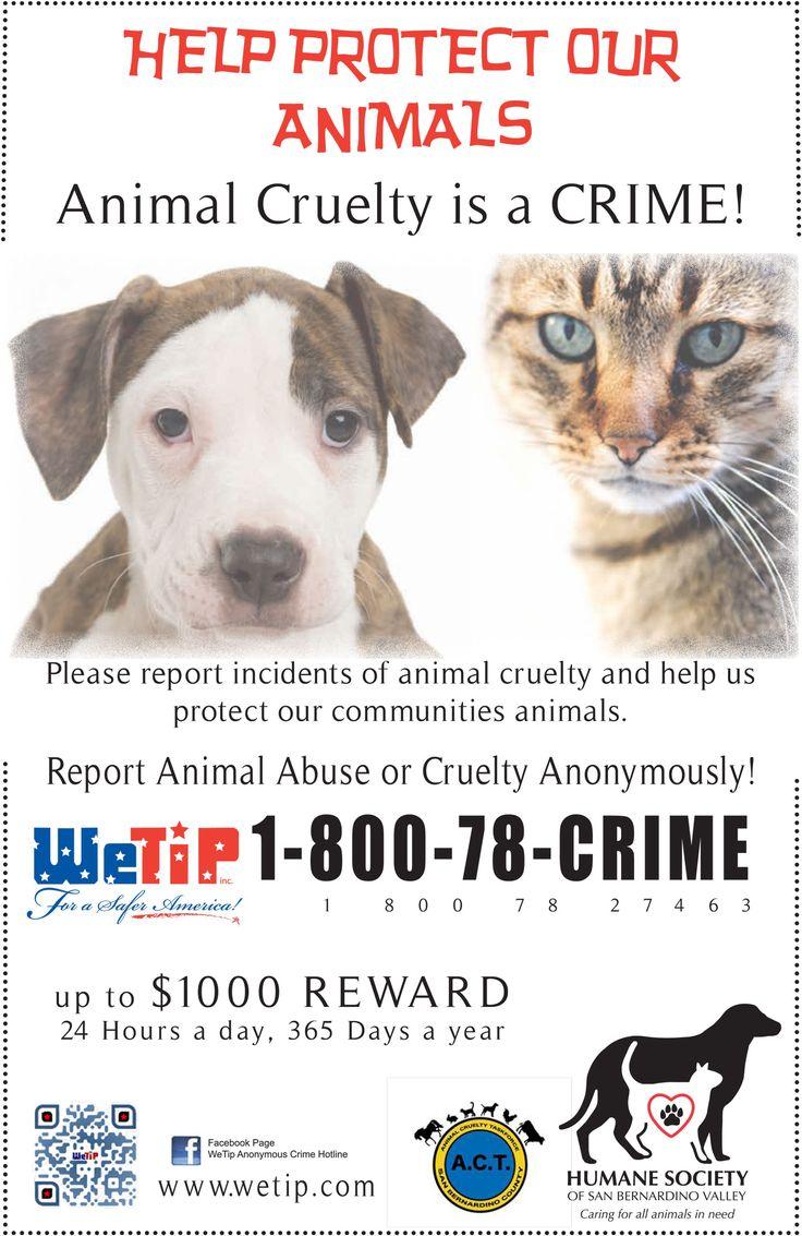 a report on animal cruelty