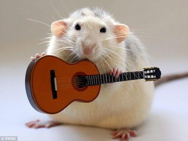 Pet rat holds a guitar; by photographer Ellen van Deelen