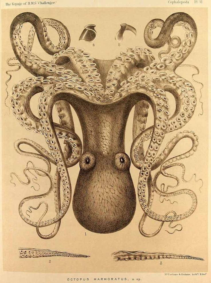 http://UpCycle.Club Forever Elusive ☕ merely presents Ernst Haeckel, in Kunstformen der Natur, 1904, Also check the video from our prolific member & inspiring coffee artist Maria A. Aristidou @upcycleclub